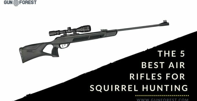 The 5 Best Air Rifles for Squirrel Hunting